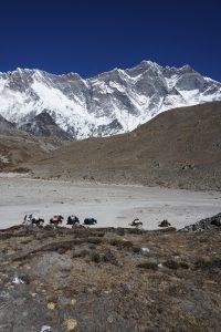 Lhotse y yaks